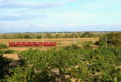養老鉄道を蜜柑撮影