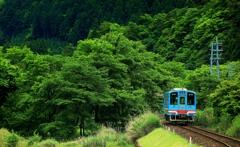 新緑の樽見鉄道