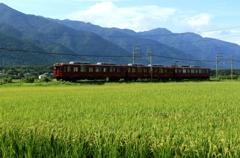 稲穂実る養老鉄道沿線