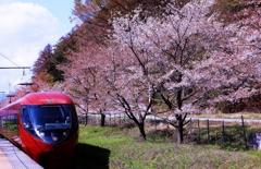 富士山ビュー特急&桜