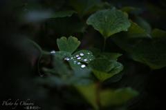 雨上がりの水滴
