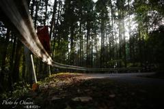 日の差し込む林道