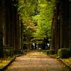 落ち葉と並木