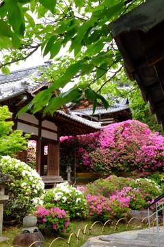 ツツジの寺