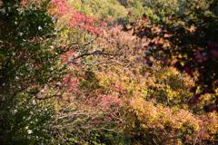 野山の彩り(1)