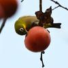 柿はうまい
