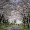 桜2020①^^¥