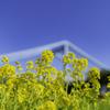 青空と春の花^^¥