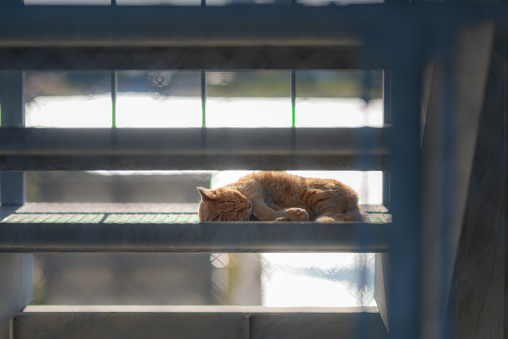 安眠の場所^^¥