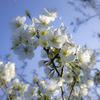 そろそろ桜が本番^^¥