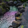 小川に水面に映った花の色