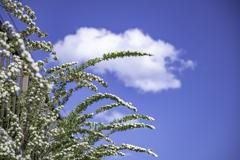 青空と白い花^^¥