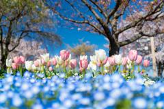 続・春のパステル