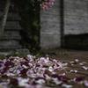 花は散るからこそ美しいwww^^¥