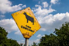 青空に牛の標識!