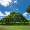 この~木なんの木、気になる木の外側^^ファイナル!