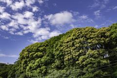 雪崩を起こしそうな木々^^¥