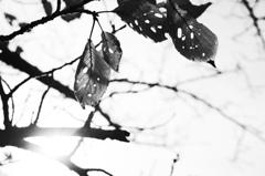 虫食いの枯葉