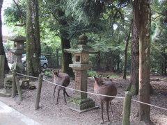 奈良公園の鹿 2頭が真似しあってる