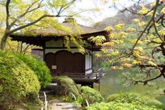 鳶魚閣 と花紅葉