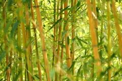 竹林の彩り