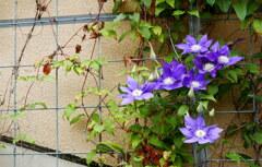 造花の様な花びら♪