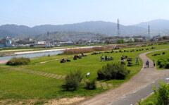 河川敷 の春 2