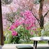 花園の中の茶の間♪