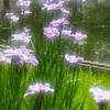 水辺に咲く2