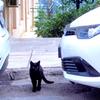デルフィのネコちゃん