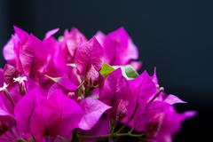 花より葉っぱ