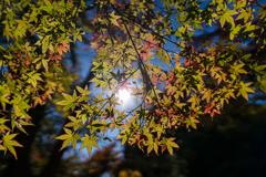 秋の光で色づく