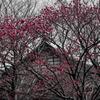 春の絵、すこし冬色