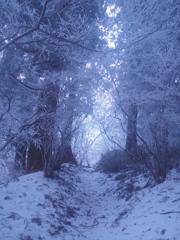 樹氷の世界4