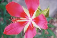 おおきな花