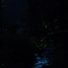 蛍の川下り