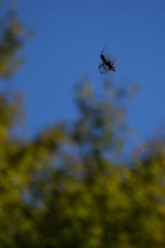 宙に浮いていた蜘蛛