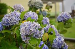 スカイランドの花たち (2)