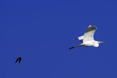 鳥たちの小松基地航空祭2019(1/3)