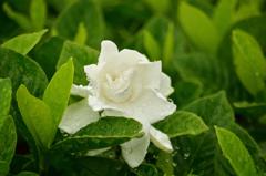 スカイランドの花たち(4)