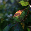 季節の色(過去写真)