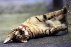 猫44・猫の日に