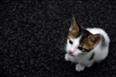 猫24・ピンボケ