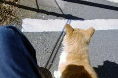 江ノ島の猫ちゃん・ご挨拶