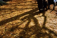 銀杏の絨毯(過去写真)
