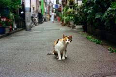 猫28・私の後ろに何か?