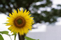 季節のバトンタッチ・そして向日葵へ