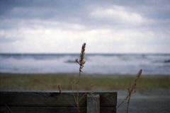 日本海・瀬波海岸の風景4-2