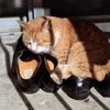 猫52・小春日和