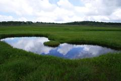 夏の雨竜沼